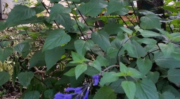 庭先の風景サムネイル