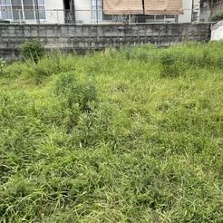 熊本 木の家造り 今日は現場の草刈り!!サムネイル